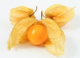 Vendo Golden Berry physalis por kilo